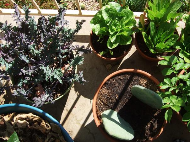 Kale, Lettuce, Cactus