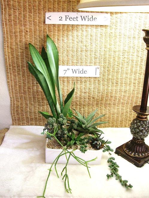 Succulents in Square Ceramic Planter 1