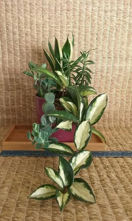 Indoor Plant in Phoenix | Plum Bioplanter #1