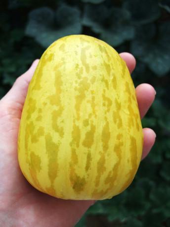 Great Melon