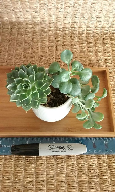 Indoor Potted Garden | Light Blue Planter #1