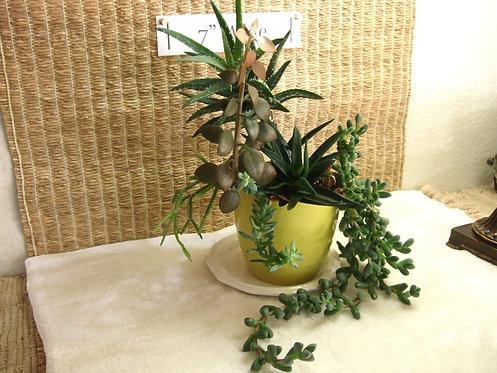 Succulent Garden in Chartreuse Planter #3
