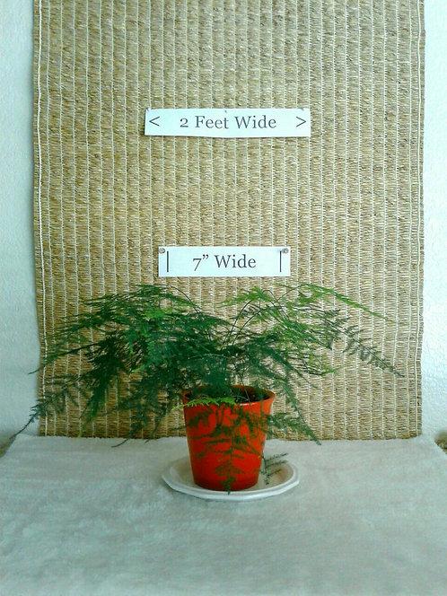 Vining Asparagus/Plumosa Fern #3 in Red Ceramic
