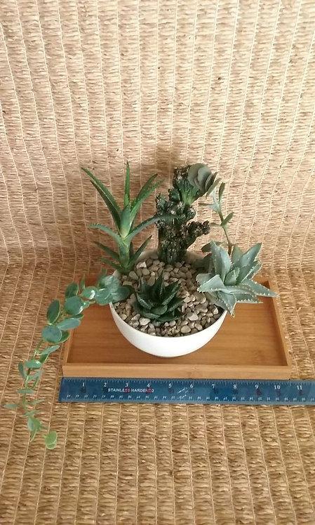 Indoor Plant in Phoenix   White Planter #20