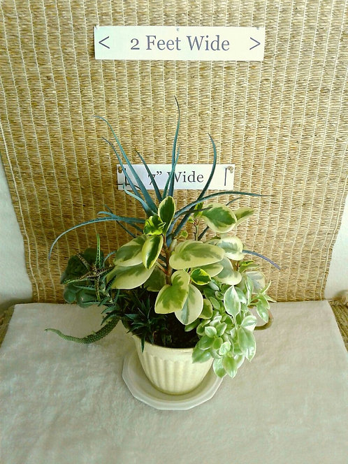 Peperomia and More in Bioplanter | Potted Succulent Garden