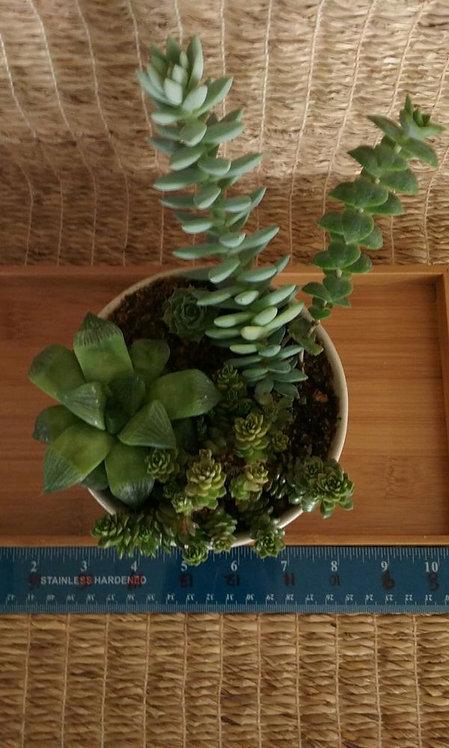 Potted Garden   White Bowl Planter #2