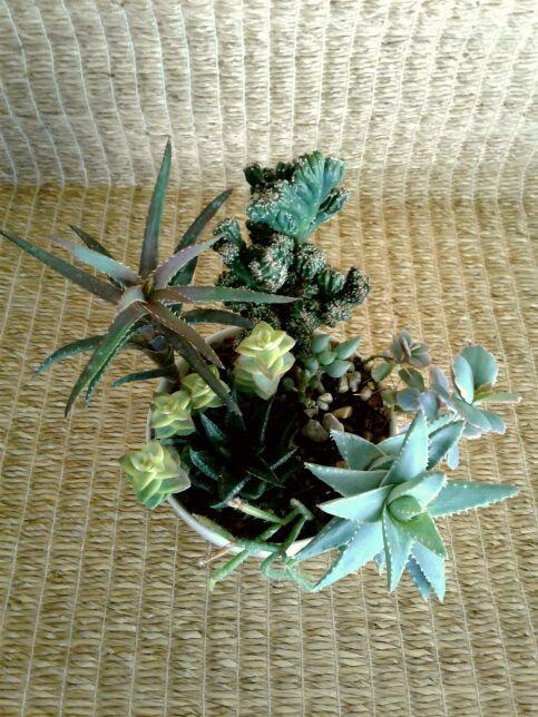 Succulent Plants in White Ceramic Planter # 20 | Northwest Phoenix