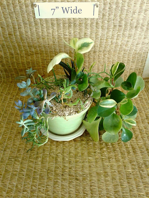 Potted Succulent Garden in Light Green Bioplanter #2 | NW Phoenix