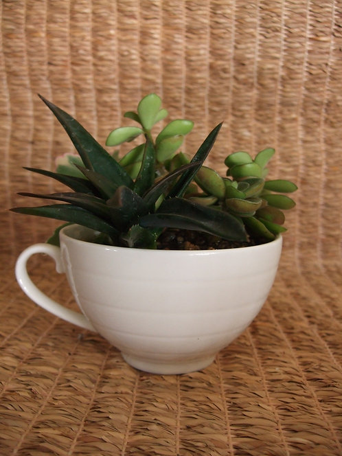 White Planter #3 (Sold)