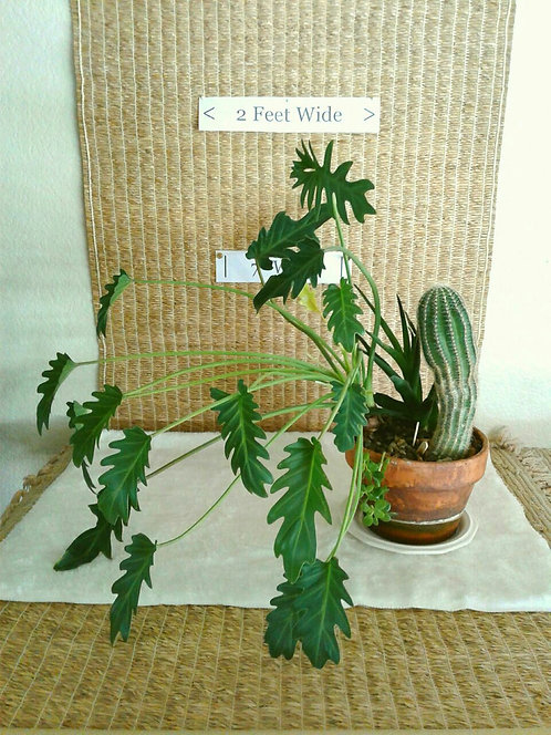 Philodendron, Aloe, and Cactus | Potted Garden