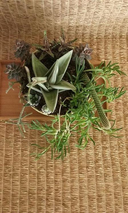Potted Garden | Sea Green Planter #1