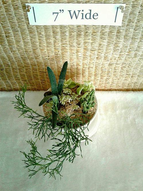 Gasteria Bicolor Succulent Bowl   Potted Succulent Garden