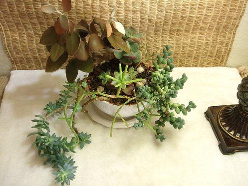 Kalanchoe Copper Spoons Succulent Garden 1