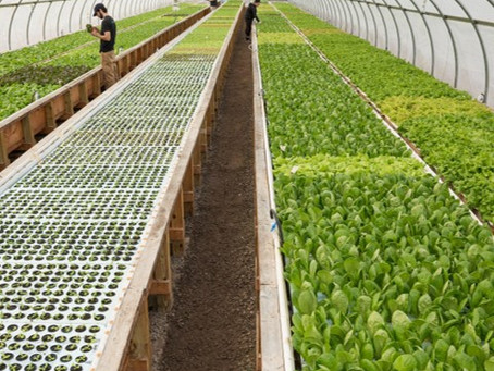 Aquaponics in Namibia: Farming for the Future