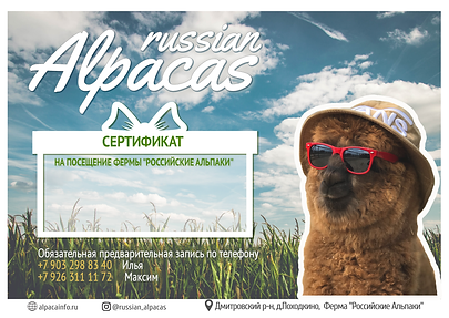 Сертификат Альпаки.png