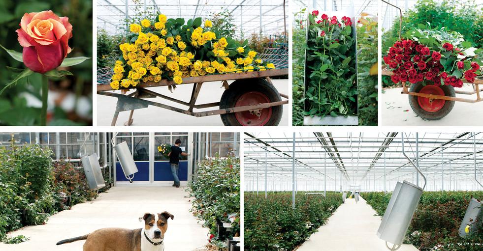 Rural Agriculture Horticulture Flower Gr