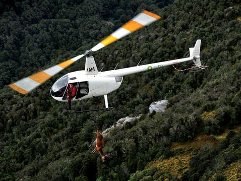 Helicopter Hunting Fiordland New Zealand