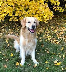 Finn-Herbst.jpg