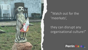 ORGANISATIONS: PLAYGROUNDS FOR WOULD-BE MEERKATS