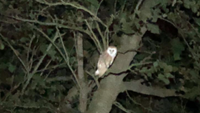 COMPLIANCE, THE JOB FOR OWLS