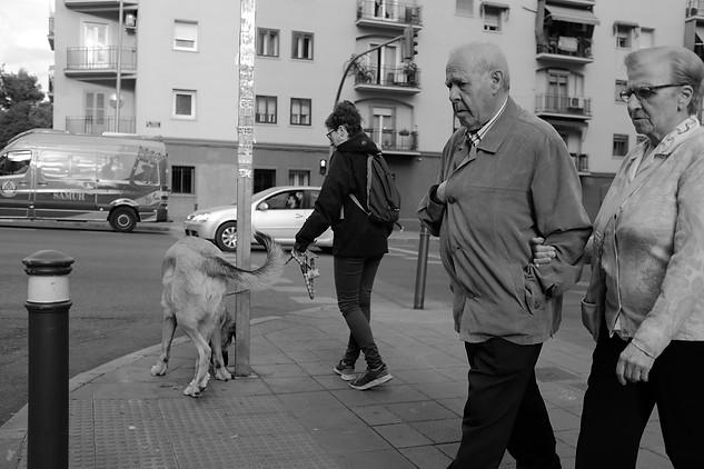 Untitled. Madrid.