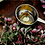 Thumbnail: Healende urter, E-guide