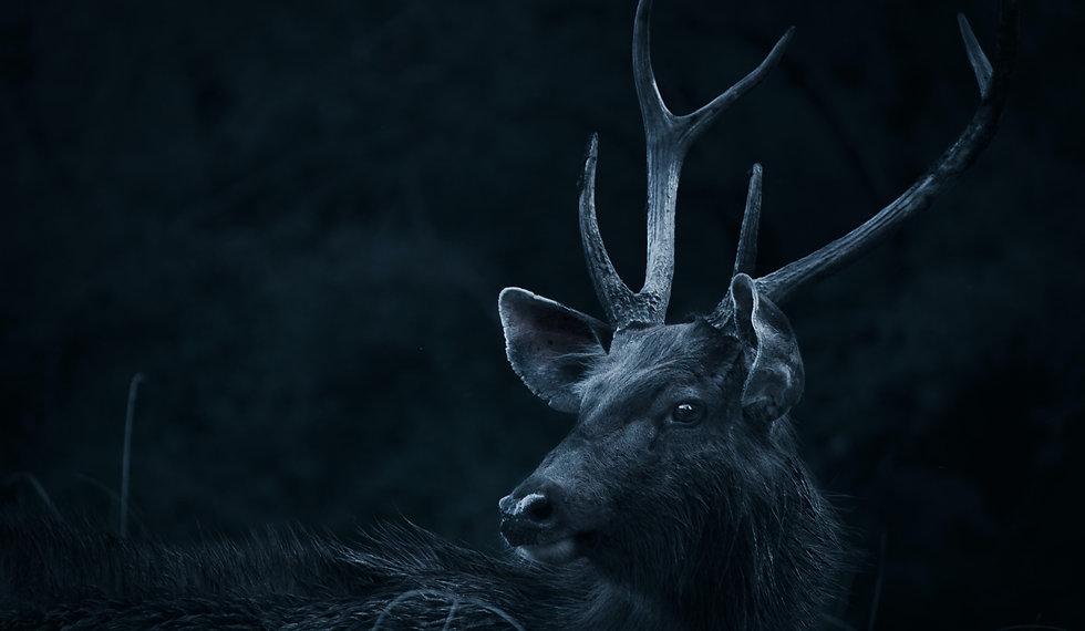 deer-looking-backwards-2302802_edited.jp