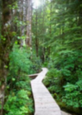 the path image.jpg