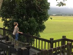 taiwanricefield