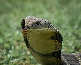 Sabbavarapu_madhu for Eastern Ghats Wildlife Society.jpg
