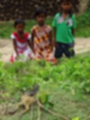 Kids watch a cobra swallowing a toad.JPG