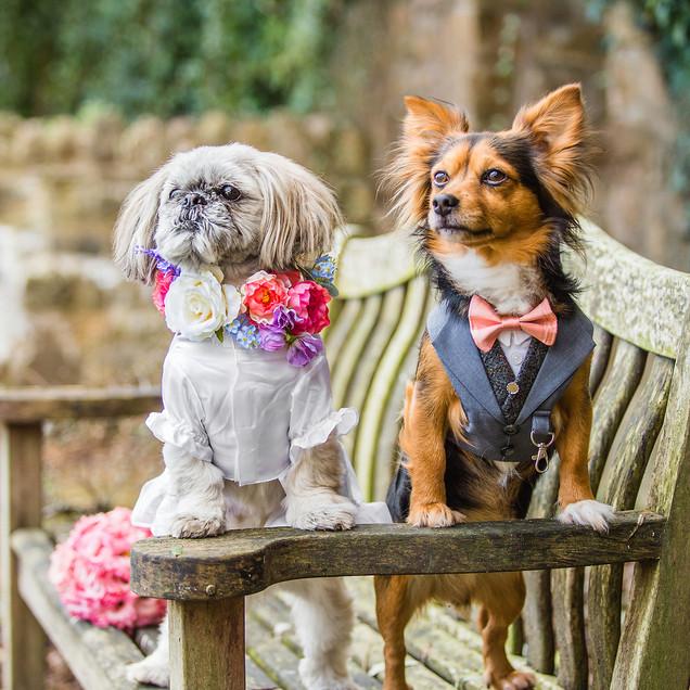 Doggy Wedding Portrait