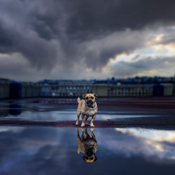 Cross breed dog standing under a stormy sky in Barry Island, Tom Harper Photography