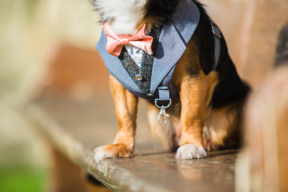 Dog Wedding Suit Harness by Tuna & Bear