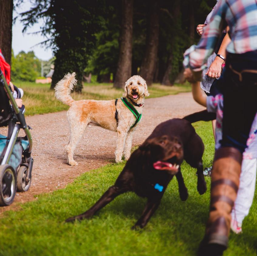 National Dog Day 2017