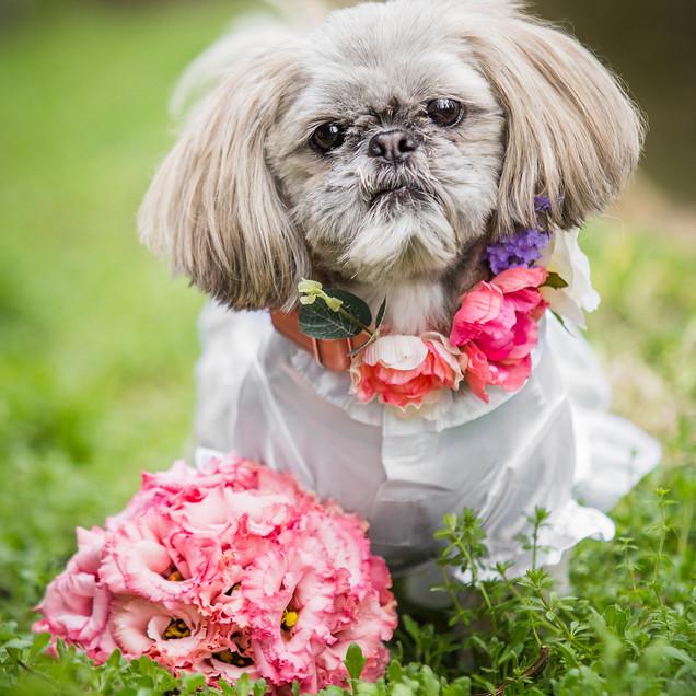 Flower Collar & Bouquet