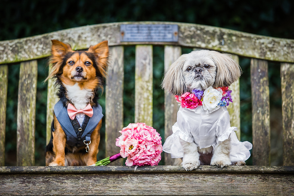 Dog Wedding, Llanyrafon Manor