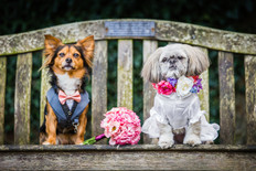 Have A Dog Friendly Wedding!