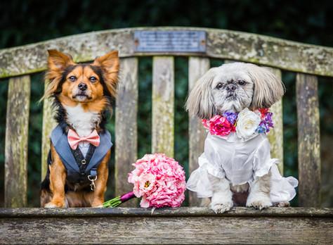 Have A Dog Friendly Wedding!