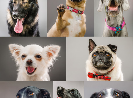 Dog Mini Sessions | Pontypool Park | July 8th 2017