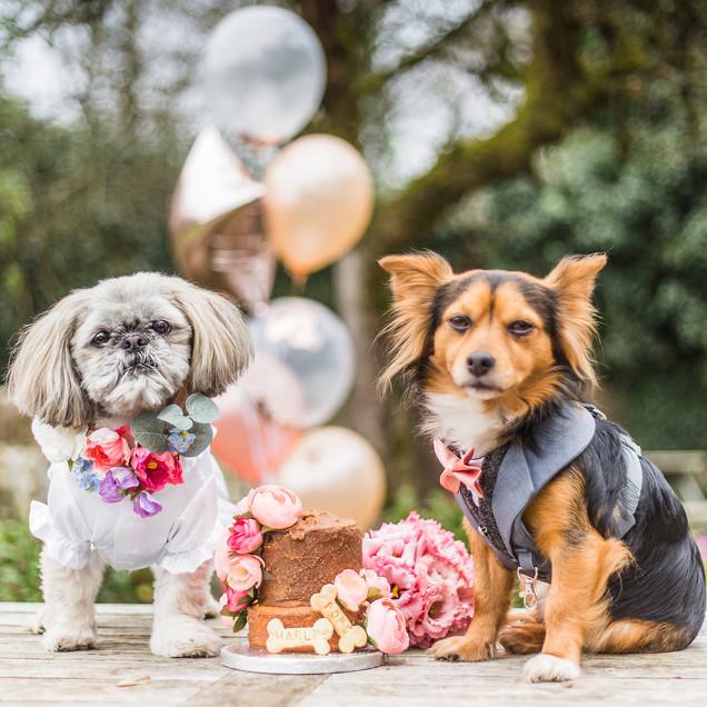 Dog Wedding Cake, Llanyrafon Manor