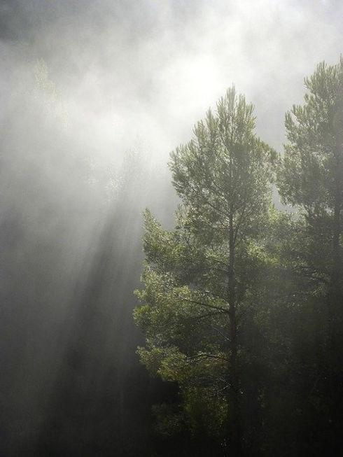 forest-1109180_640.jpg