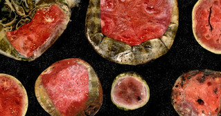 rotting watermelons