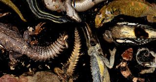 reptiles rotting