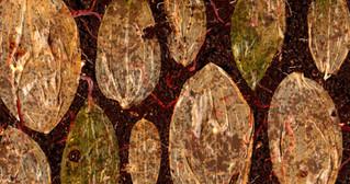 red wrigglers eating leaves