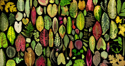 tropical leaves collage