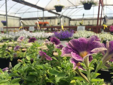 Weekly Business Profile: Altona Greenhouse