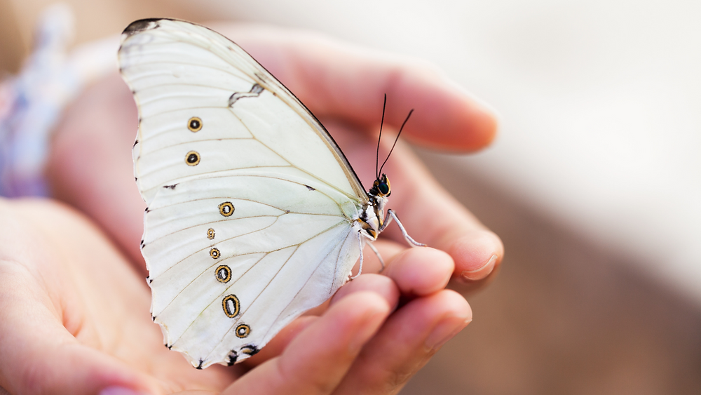 The Butterfly Effect, Butterflies for Mental Health 2021 with Ashley Whittington, Feature story by Brilliant-Online