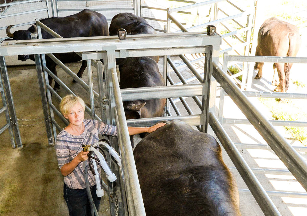 Great Lakes Food Trail, Burraduc Farm, Dairy, feature story by Brilliant-Online