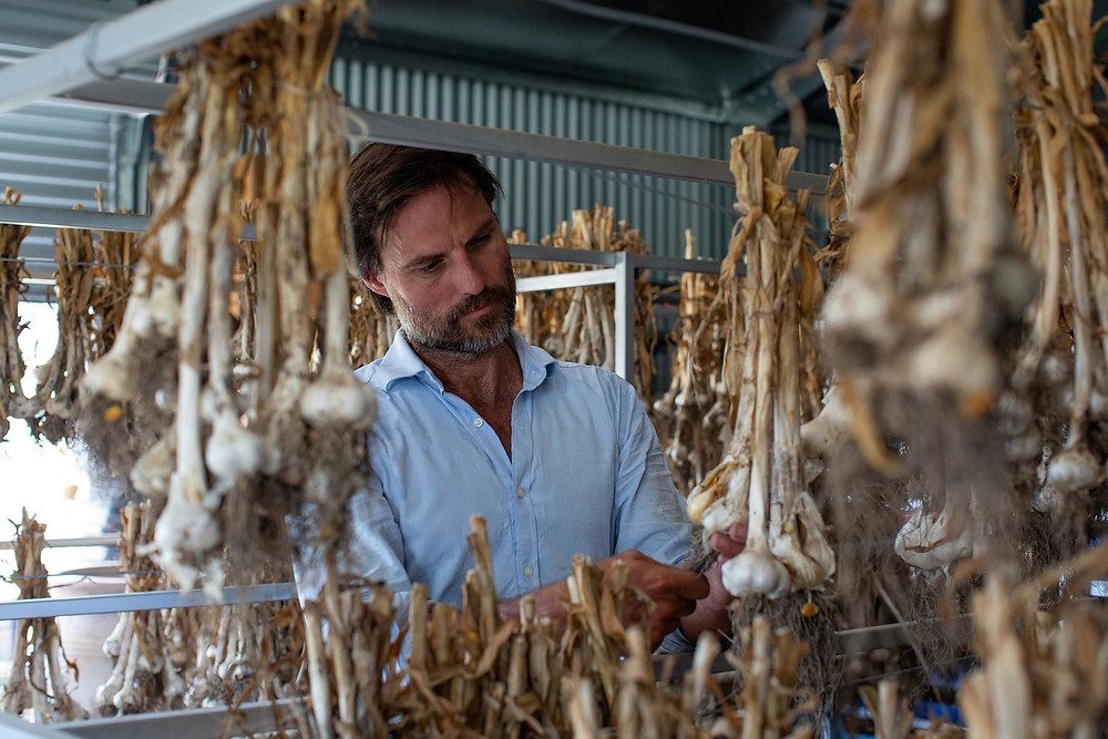 Great Lakes Food Trail, Valley View Farm, garlic, feature story by Brilliant-Online